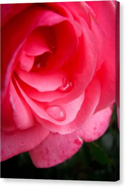 Rose Teardrop Canvas Print