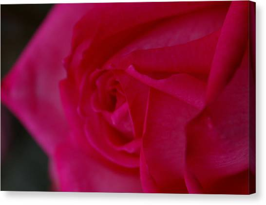 Rose6 Canvas Print by Kennith Mccoy