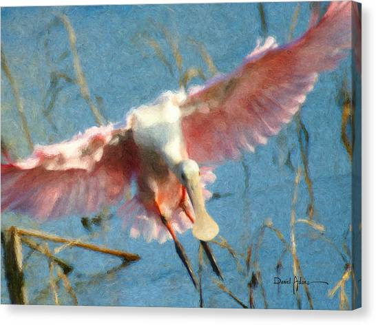Da203 Roseate Spoonbill By Daniel Adams Canvas Print