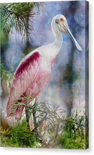 Spoonbills Canvas Print - Roseate Spoonbill In Evangeline Parish by Bonnie Barry