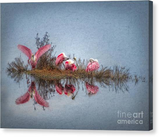 Canvas Print - Roseate Spoonbills At Rest by Lianne Schneider