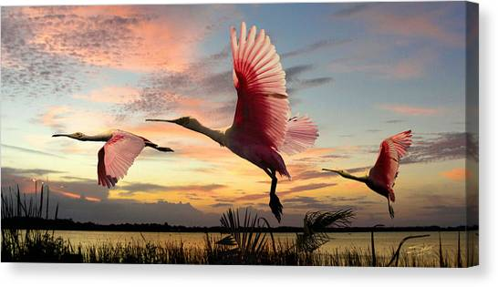 Roseate Spoonbills Of Lake Tarpon Canvas Print