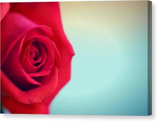 Roseblue Canvas Print