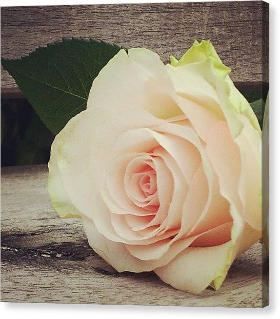Decorative Canvas Print - Rosebud On Wood by Jacqueline Schreiber