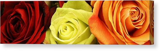 Roses Of Different Colors Canvas Print by Bruce Bley