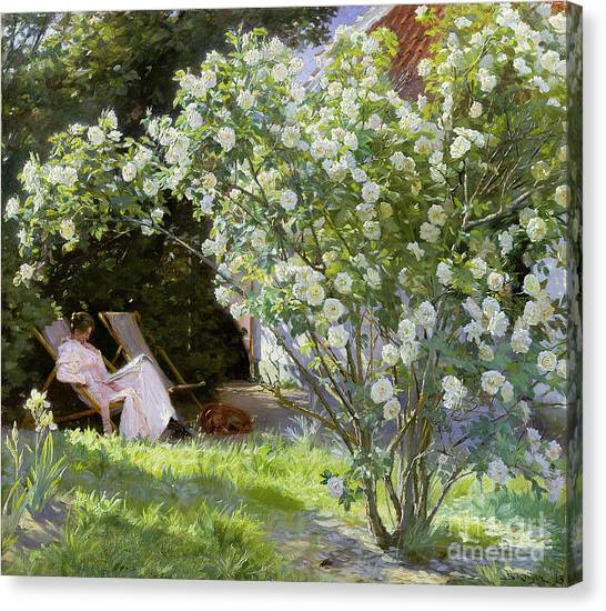 Rose In Bloom Canvas Print - Roses by Peder Severin Kroyer