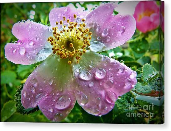 Rosey Raindrops Canvas Print