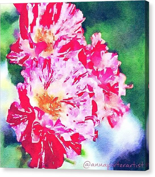 Red Roses Canvas Print - Rosy  by Anna Porter