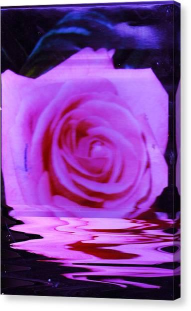 Canvas Print - Rosy  by Anne-Elizabeth Whiteway