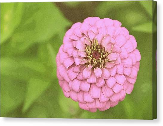 Rosy Corsage Canvas Print by JAMART Photography