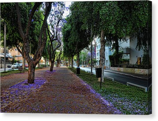 Rothschild Boulevard Canvas Print
