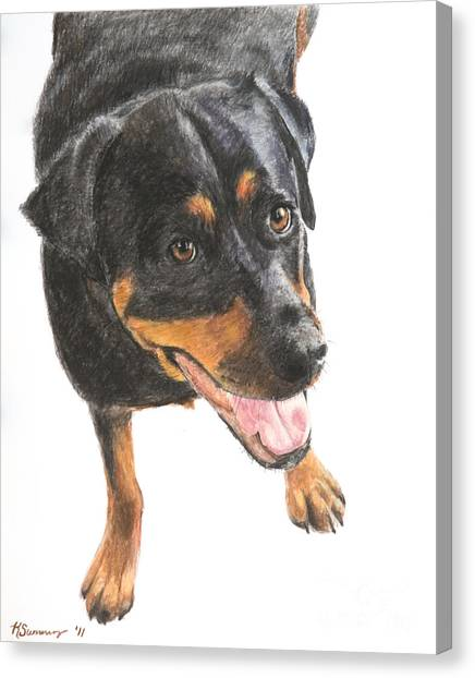 Rottweiler Looking Up Canvas Print