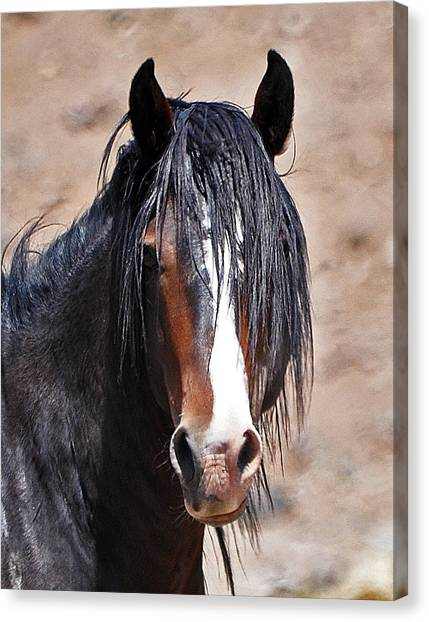 Rough And Ready Canvas Print