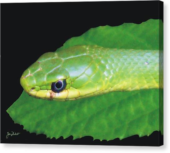 Rough Green Snake Canvas Print