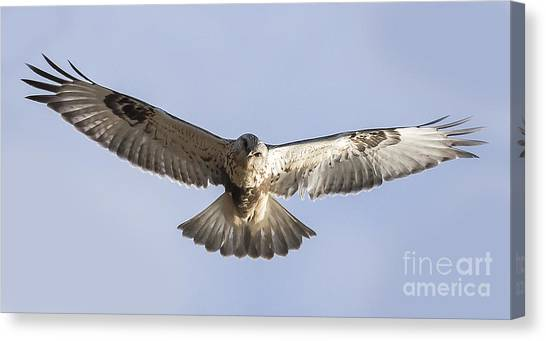 Rough-legged Hawk Coming Right At You Canvas Print by Ricky L Jones
