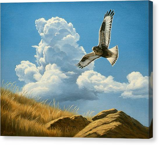 Hawks Canvas Print - Rough-legged Hawk by Paul Krapf