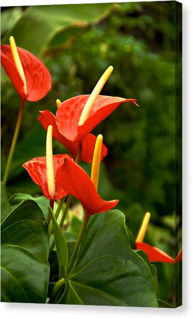 Rousing Reds Canvas Print