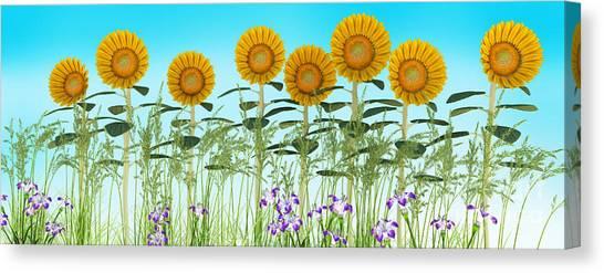 Row Of Sunflowers Canvas Print