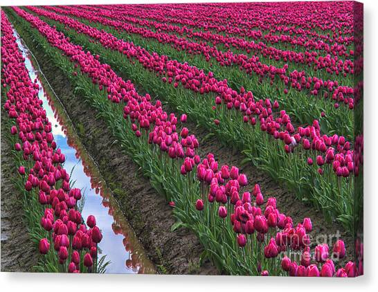 Kung Fu Canvas Print - Rows Of Kung Fu Tulips by Mark Kiver