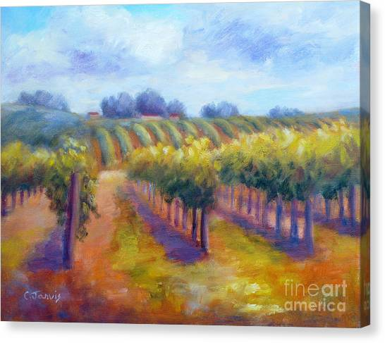 Rows Of Vines Canvas Print