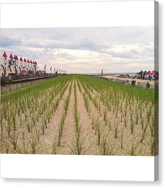 Seagrass Canvas Print - #rows #seagrass #boardwalk #oceancity by Josh Kinney