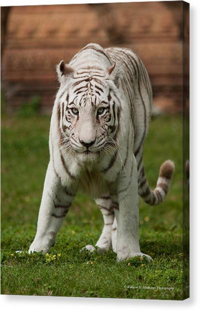 Royal Bengal Tiger Canvas Print