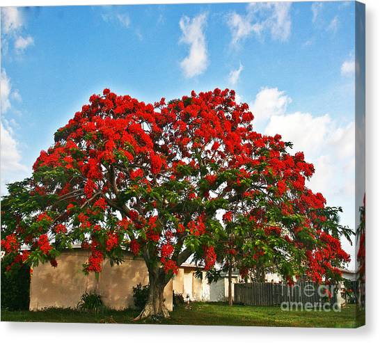 Royal Panciana Tree Canvas Print