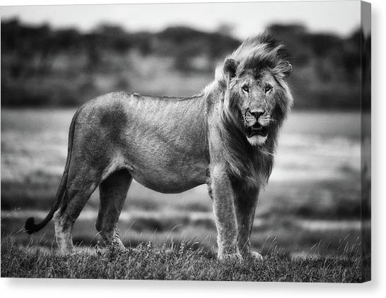 Royal Pose Canvas Print by Mohammed Alnaser