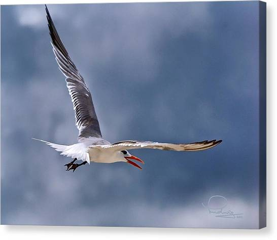 Royal Tern 1 Canvas Print