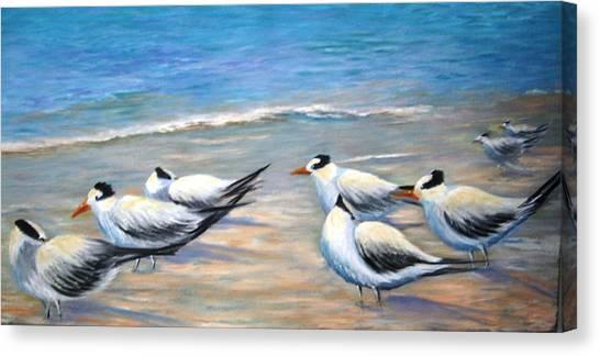 Royal Terns Canvas Print by Teresita Hightower