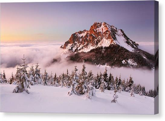 Fir Trees Canvas Print - Rozsutec Peak by Tomas Sereda