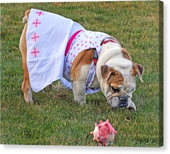 English Bull Dog Canvas Print - Ruby 02 by Jeff Stallard