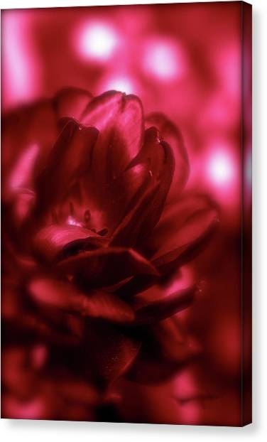 Ruby Red  Dahlia With Bokeh Canvas Print