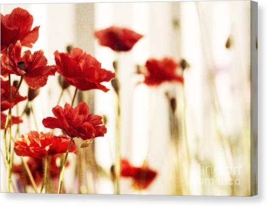 Blossom Canvas Print - Ruby Reds by Priska Wettstein