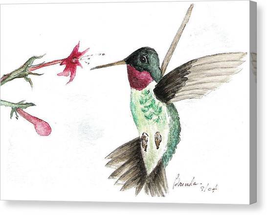 Ruby Throated Hummingbird Canvas Print by Brenda Ruark