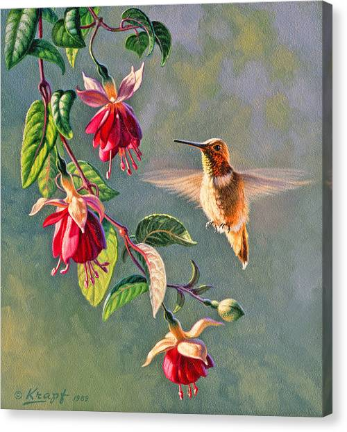 Small Birds Canvas Print - Rufous And Fuschia by Paul Krapf