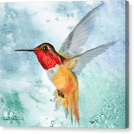 Da199 Rufous Humming Bird By Daniel Adams Canvas Print