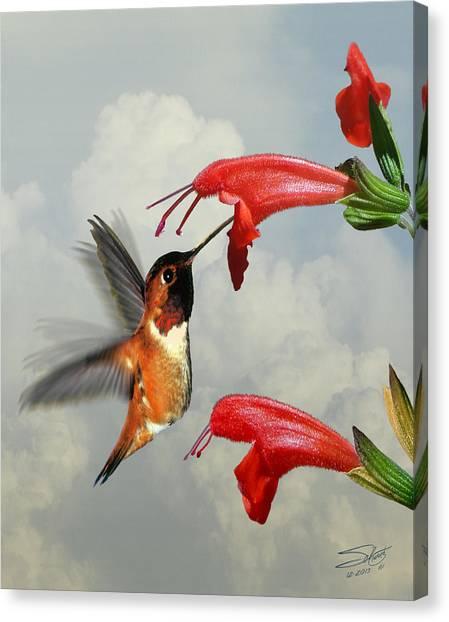 Rufous Hummingbird And Wild Flower Canvas Print
