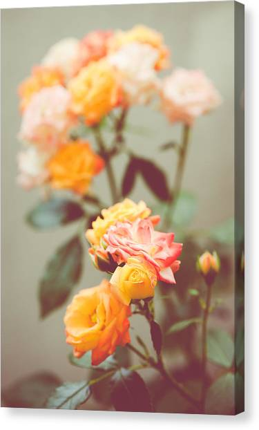 Rumba Rose Canvas Print