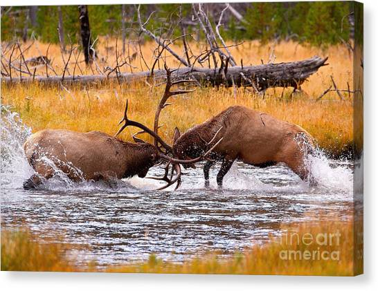 Rumble In The River Canvas Print