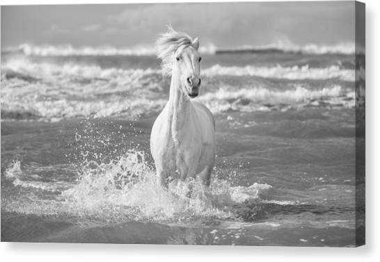 Run White Horses I Canvas Print by Tim Booth