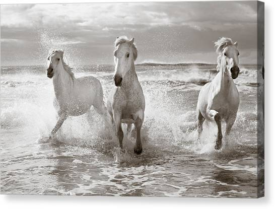 Black Stallion Canvas Print - Run White Horses II by Tim Booth