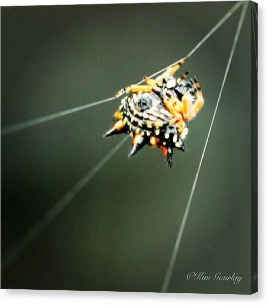 Spider Web Canvas Print - Running Away From The Crazy Lady Taking by Kim Gourlay