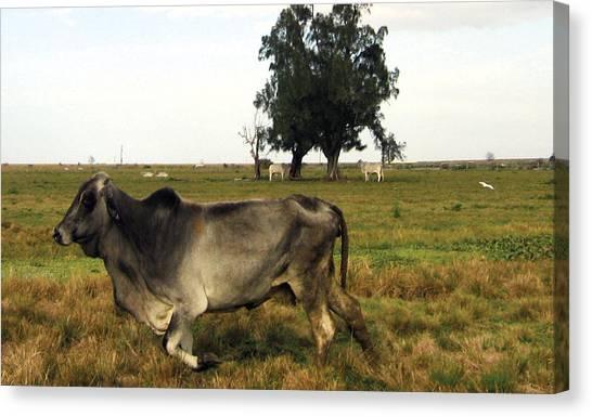 Running Cow Canvas Print by Kyra Belan
