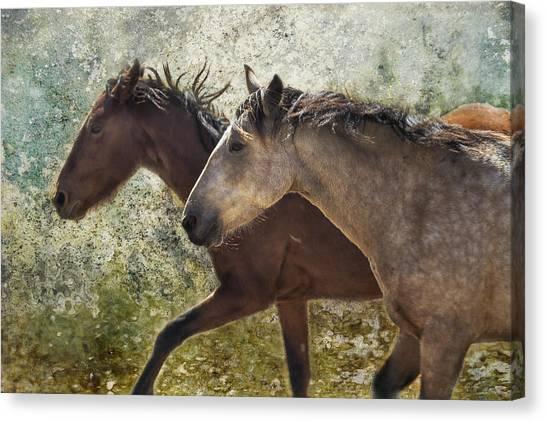 Running Free - Pryor Mustangs Canvas Print