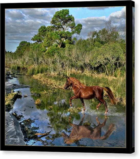 Running Free Canvas Print by Tammy Thompson