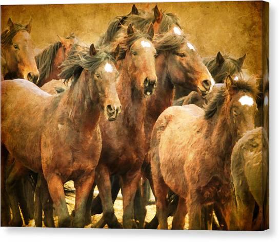 Brown Ranch Trail Canvas Print - Running Herd by Steve McKinzie