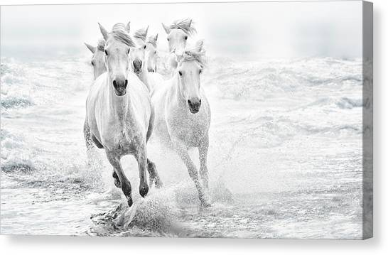 Sea Horse Canvas Print - Running In The Sea by Lucie Bressy