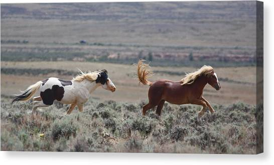 Running Mustangs Canvas Print