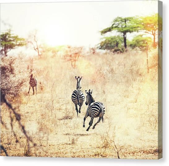 Running Zebras Canvas Print by Borchee